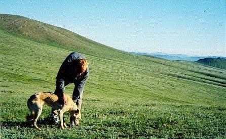 Mongolski przyjaciel