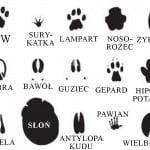 afrykanskie tropy (rozwiazanie)