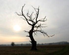 Drzewo w okolicy Zbrudzewa