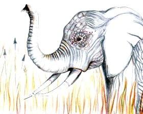 Łowy na słonia (rys. Genevieve Bayman)