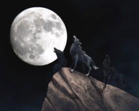 Księżyc i wilki...