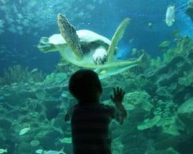 Aquarium w Kuala Lumpur