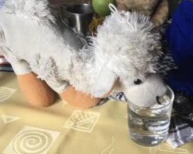 wielblad pije